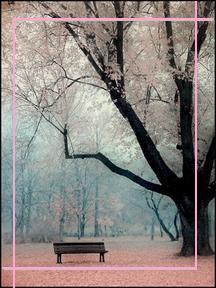 serenitywoods.jpg