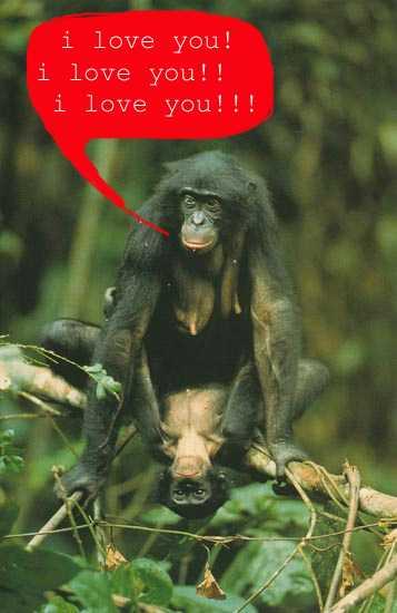 Секса с обезьяной