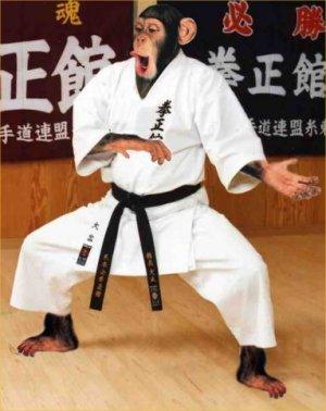 karate-chimp.jpg