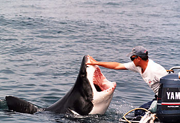 shark-in-south-africa.jpg