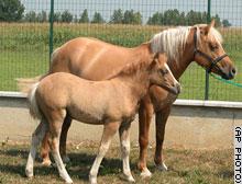 cloned-horse.jpg