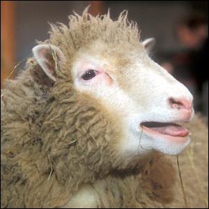 dolly-the-sheep.jpg