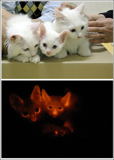 glow-in-the-dark-cat.jpg
